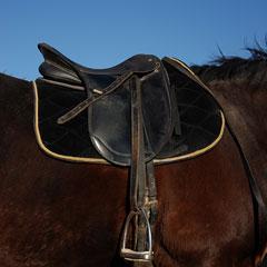 english saddle with saddle pad