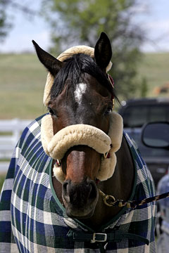 horse blanket and accessories